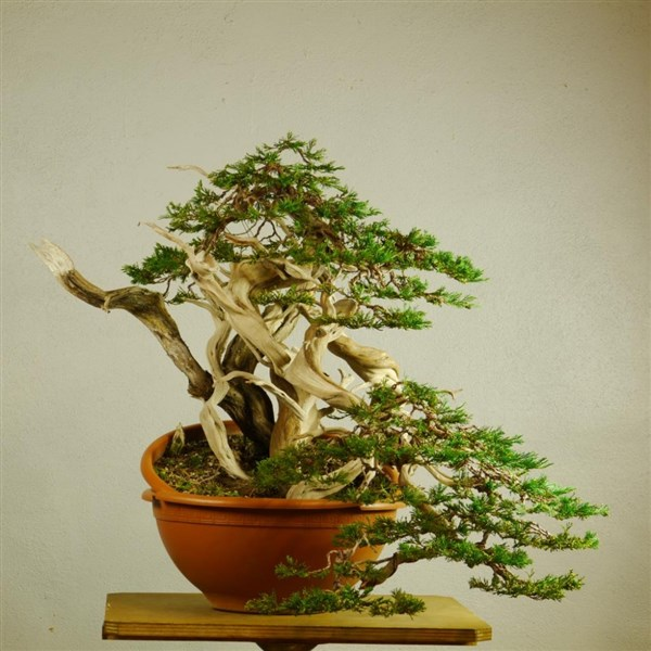 Bonsaisense & Bjorvala School of Bonsai (1)