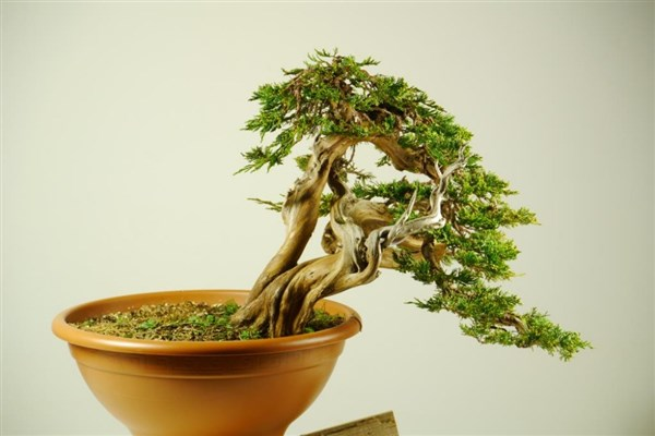 Bonsaisense & Bjorvala School of Bonsai (2)
