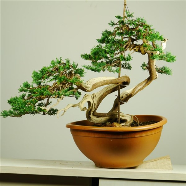 Bonsaisense & Bjorvala School of Bonsai (3)